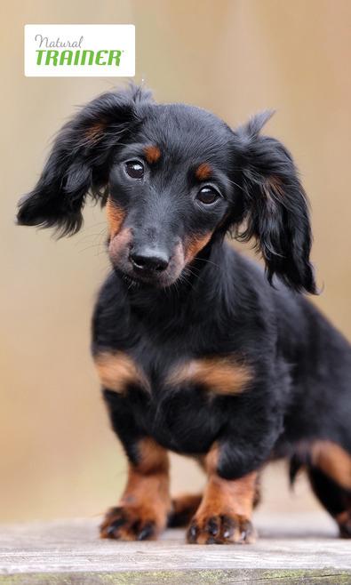 Focus On: Natural Trainer crocchette per cani di p Natural-Trainer_02_6064_1.jpg (Art. corrente, Pag. 1, Foto normale)